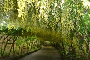 Bodnant Garden (5)